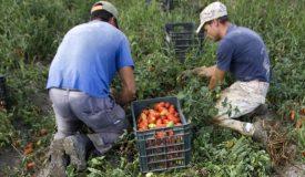 muncitori-agricultura